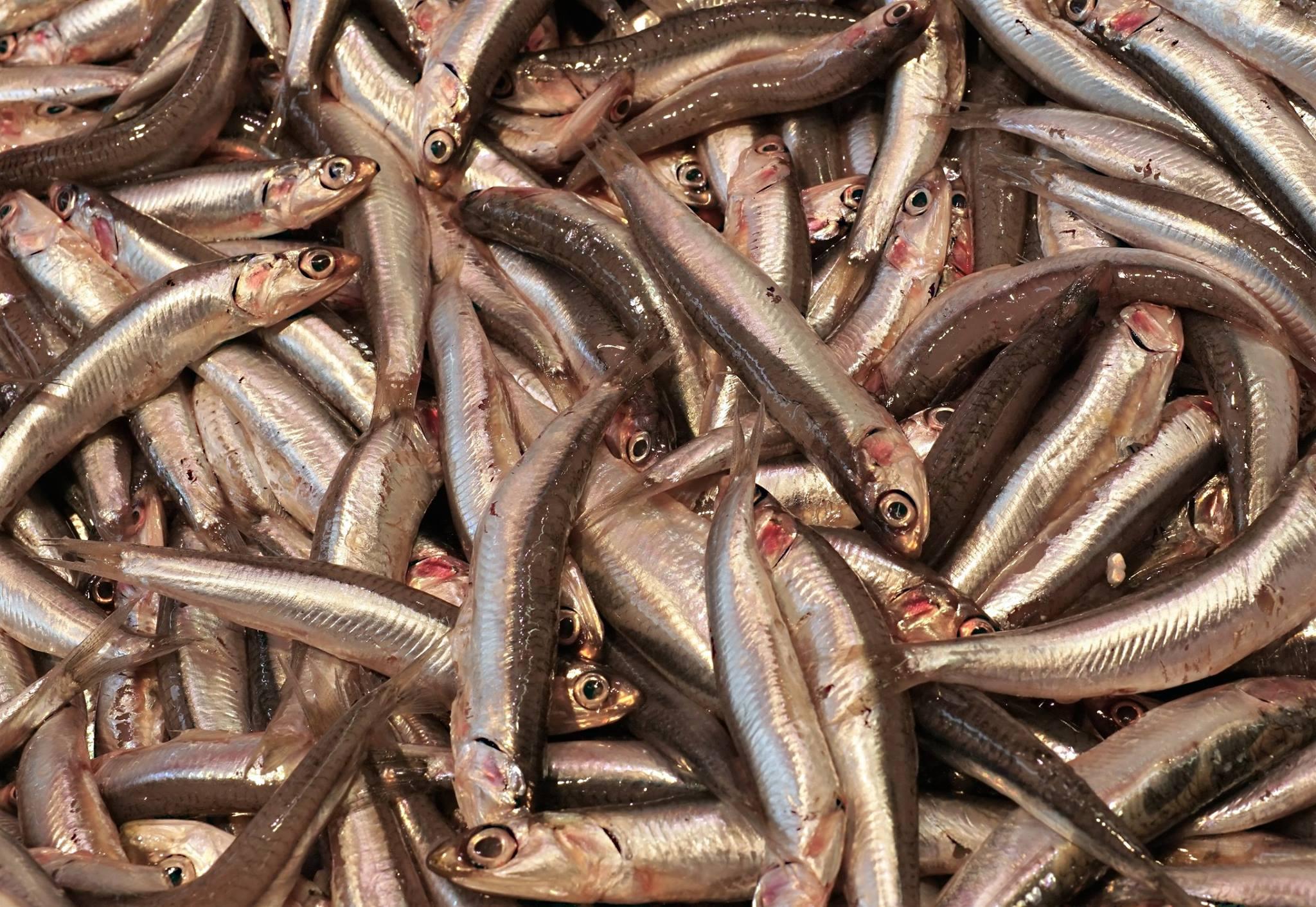 Vishandel Brouwer 11